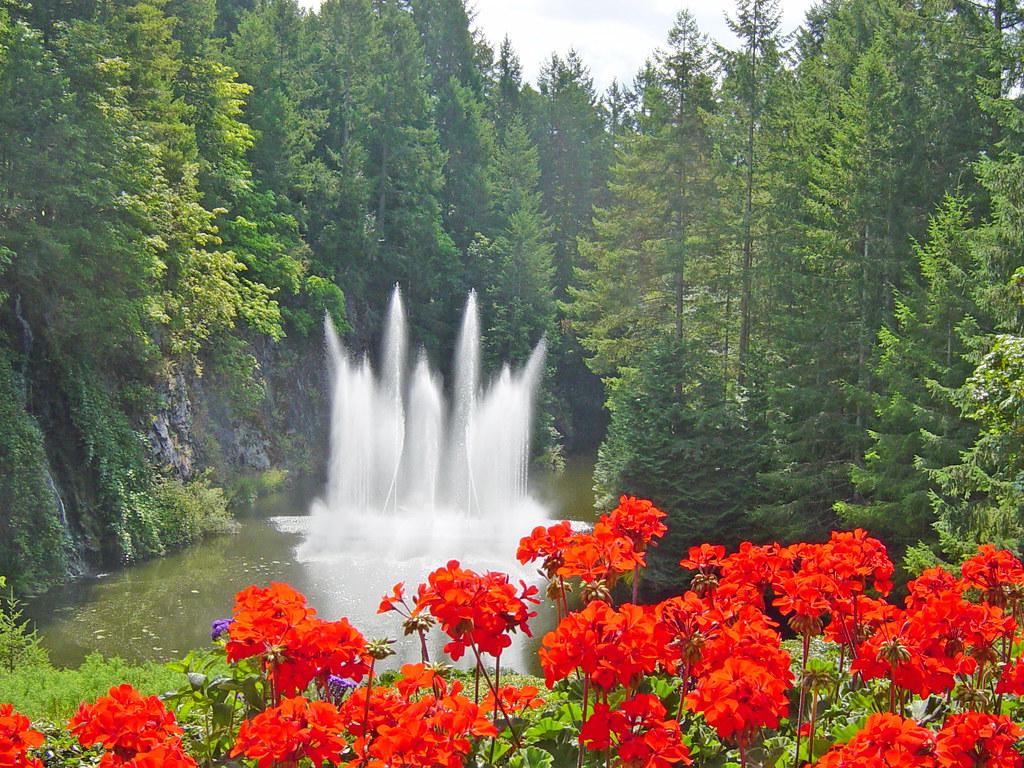Ross Fountain And Geraniums Butchart Gardens B C Brit