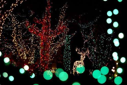 Things to do in Vegas for Christmas - Ethel M's Cactus Garden