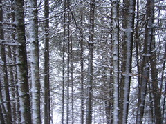 woodland, deciduous, branch, winter, tree, sunlight, plant, grove, forest, trunk, natural environment, biome, temperate broadleaf and mixed forest, temperate coniferous forest, spruce,