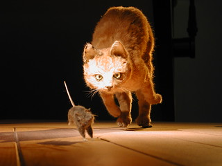 Cat chasing mouse