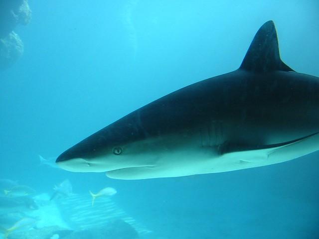 Shark | Flickr - Photo Sharing! Shark