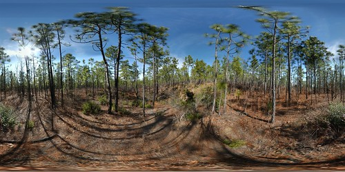 autostitch panorama heritage pine forest geotagged sand pano south 360 carolina henderson preserve aiken 360° 360°x180° equirectangular longleaf 180x360 180°x360° geolat3360935 geolon8174145 psphere