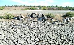 Dezastru ecologic în lunca Prutului