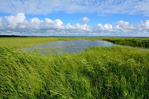 nature water coast estonia estonian naturelovers naturephoto coastalmeadow