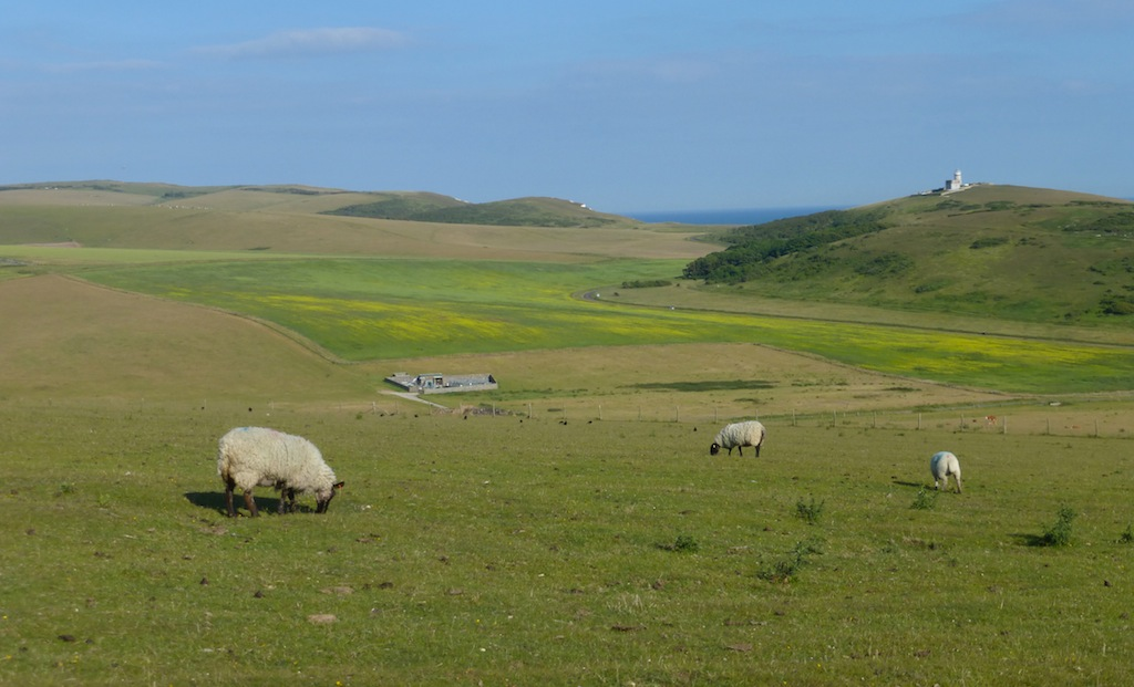 Belle Tout, Beachy Head and sheep Eastbourne to East Dean walk