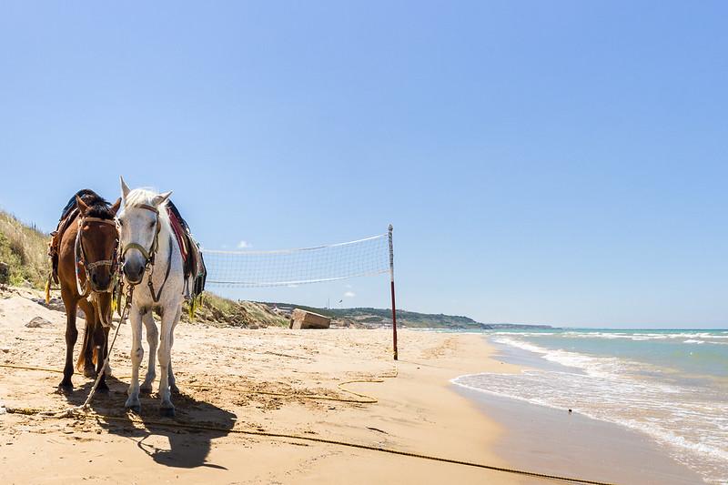 Horse - Kilyos Beach, Turkey
