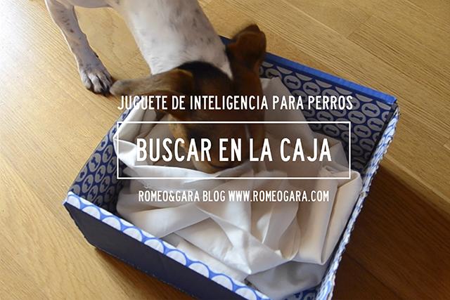 Juego casero para perros: Buscar en la caja