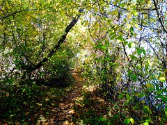 Wantagh - Twin Lakes Preserve - Autumn (9)