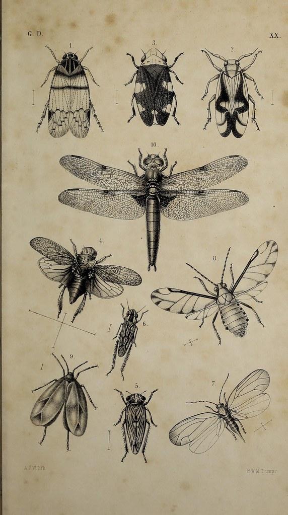 Biodiversity - Cover