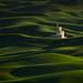 Rolling Green by Majeed Badizadegan