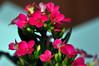 5ª Flower... by GFerreiraJr ®