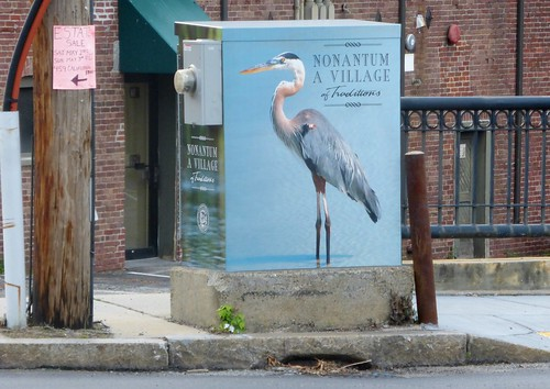 Great blue heron on electrical box
