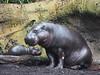 Melbourne Zoo 0715 P7249230a by sophbax22