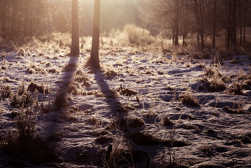 snow frosty winter morning swamp wetlands frozen cold chilly vegetation trees shadows sunrise amanecer enero january canon eos 5d mark iv cityforest