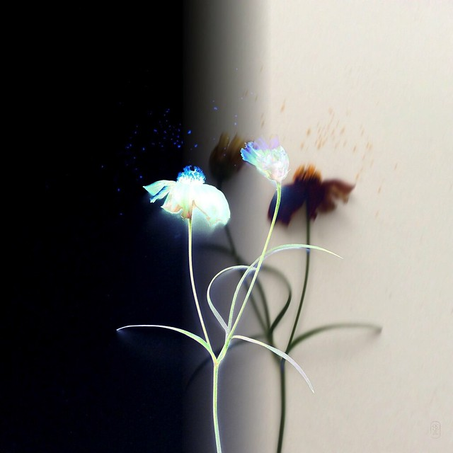 """""""in other dimensions, there are flowers"""""""
