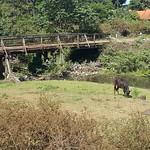 Sat, 01/21/2017 - 11:49 - A bridge, a horse and a stream