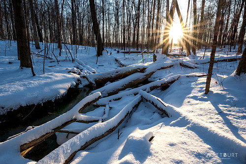 logs trees michigan sunrise winter woods snow annarbor unitedstates us