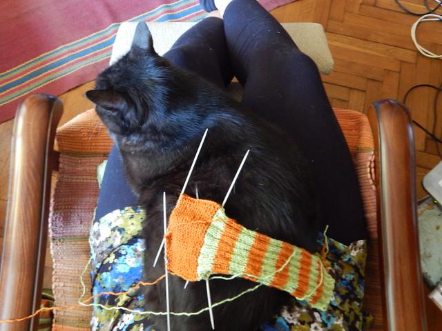 чёрный кот Муся на ручках и полосатые носки
