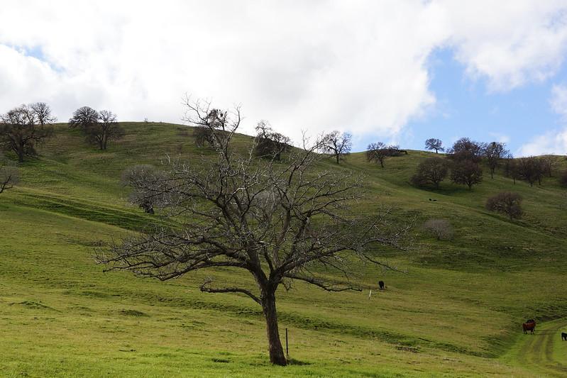2017-01-05 Contra Loma Regional Park (#4)