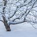 Snowy morning... by laszlofromhalifax