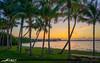 Sewalls Point Stuart Florida Causeway Coconut Trees by Captain Kimo