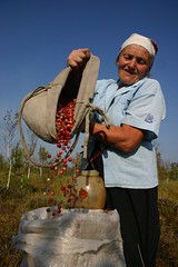 Biodiversity in Belarus