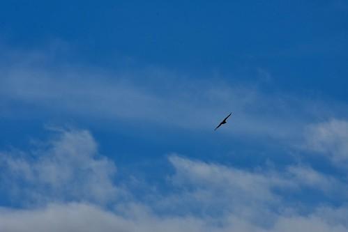 2017 January 16, Bald Eagle Waterloo Nokon D7200