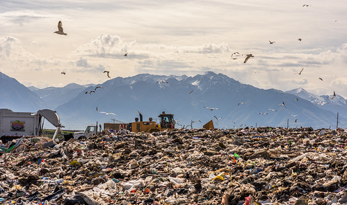 Seagulls Descend Upon the Trans-Jordan Landfill by Geoff Livingston