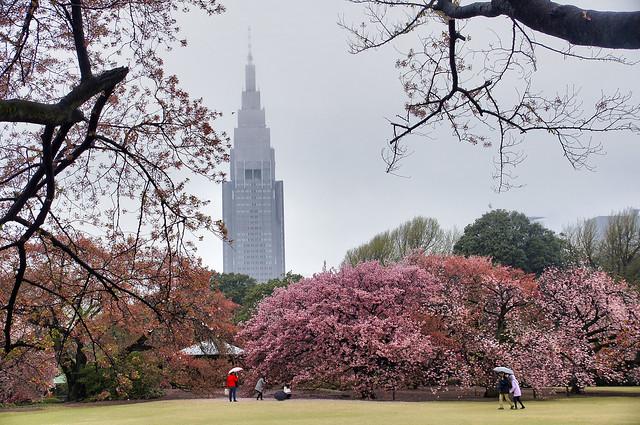 Spring in Shinjuku Gyoen