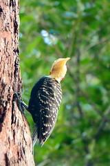 animal, branch, wing, nature, fauna, woodpecker, bird, wildlife,