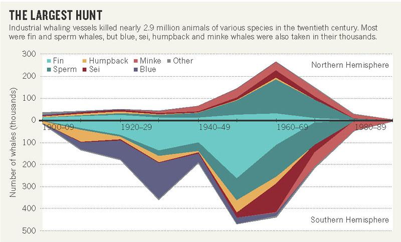 二十世紀隨著時間而改變的主要獵捕鯨魚物種。圖片取自:D. Cressey. 2015年研究文章