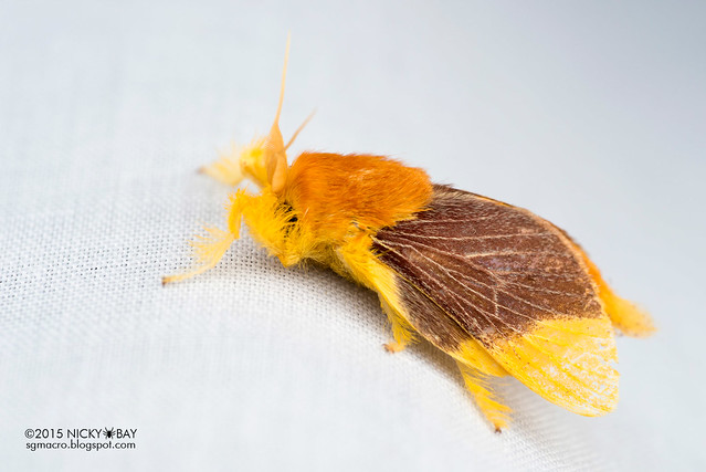 Moth - DSC_4695