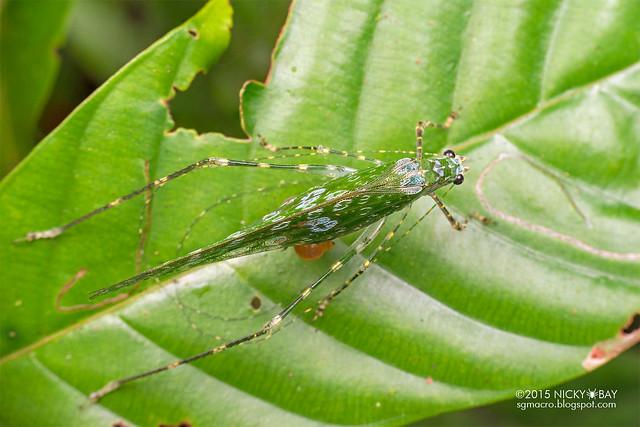Katydid (Tettigoniidae) - DSC_5236