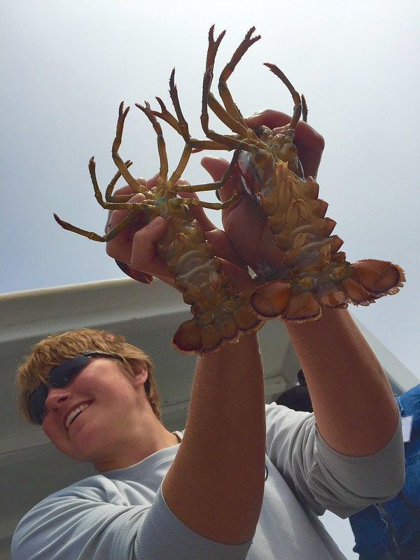 Lobstering demonstrated