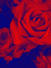 Red, Rose and Blue