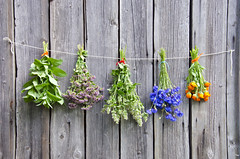 various medical herbs on wooden wall