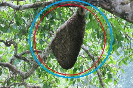 Mật ong rừng nguyên chất 100%
