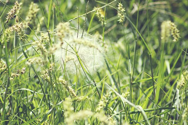 Crazy weeds