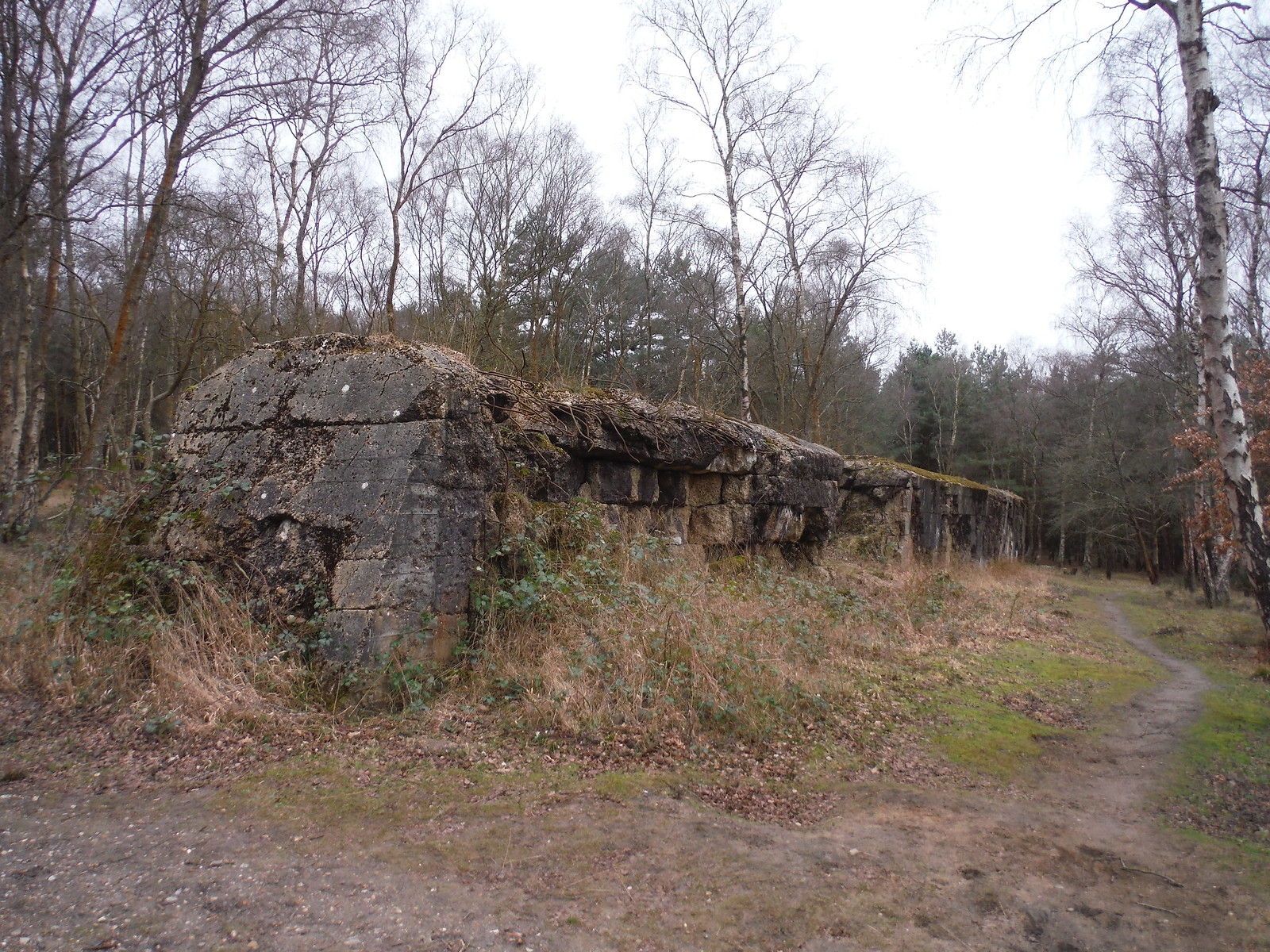The Atlantic Wall, Hankley Common SWC Walk 144 Haslemere to Farnham - Atlantic Wall Extension