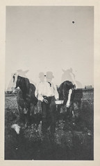 Double exposure of a man with his horses