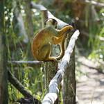 Di, 14.07.15 - 15:36 - Zoologico de Cuenca