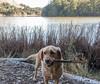 Bodega and stick