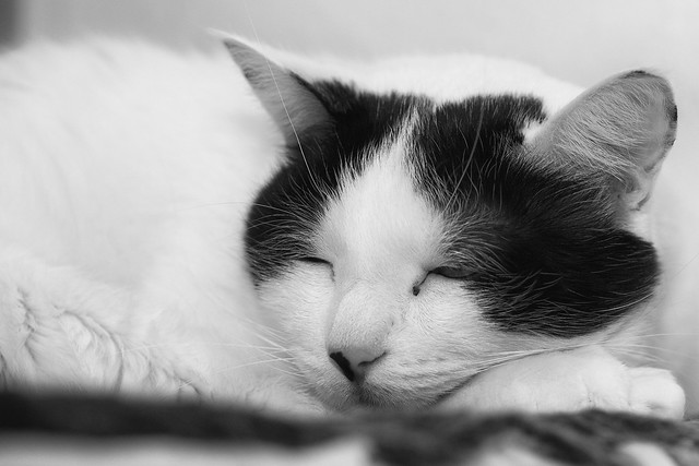 Do black-and-white cats dream in color? -[ Happy Caturday ]-