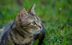 kitty (40)
