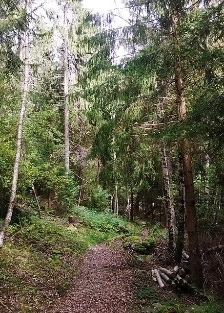 la floria trail chamonix france