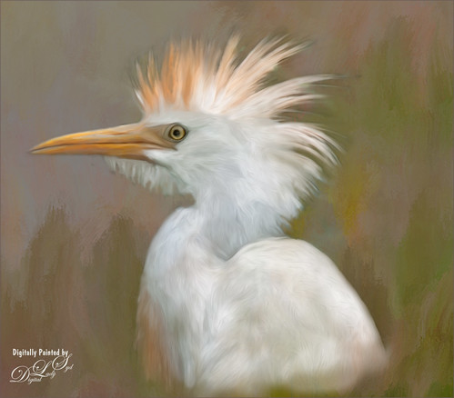Image of a Cattle Egret using Topaz Impression