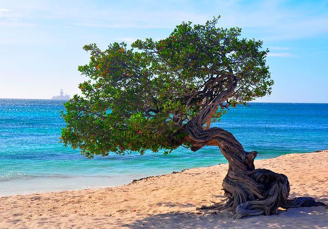 Aruba. Eagle Beach.