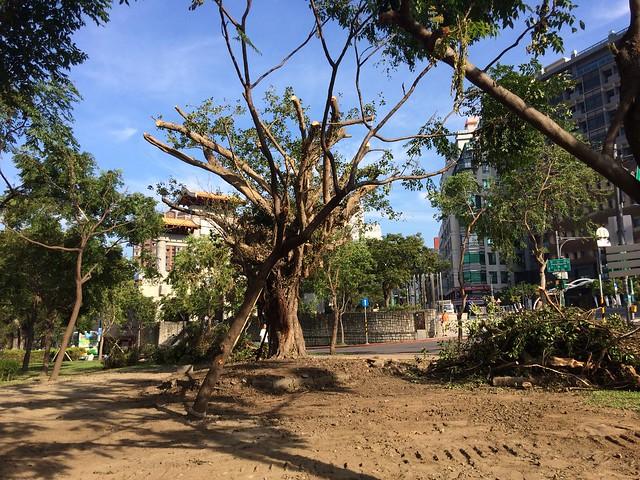 樹 002