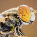 Pollens by zgrkrmblr