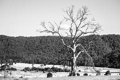 Tasmania Dec 2016